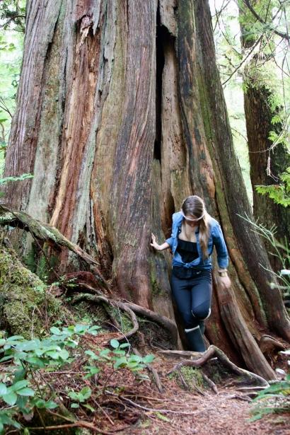 Cedar Plant Ally - Pic courtesy of Beth