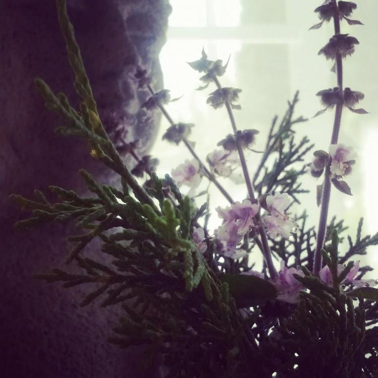Cedar twigs and basil blossoms from the garden. Such uplifting blessings.