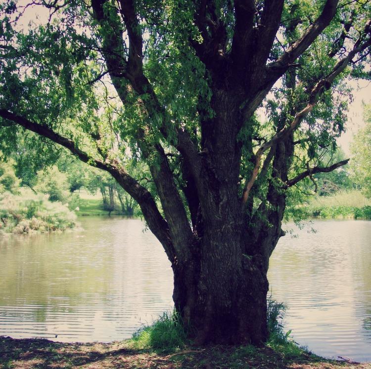 tree breathing