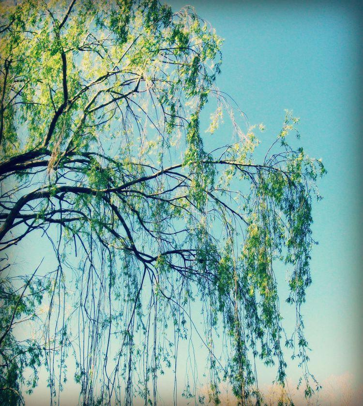 dancing willow 3