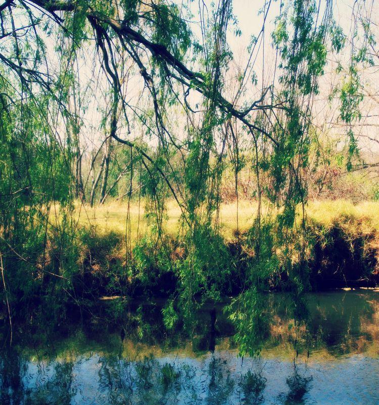 willow dancing 2