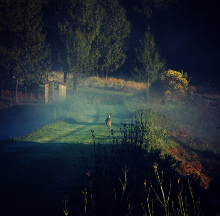 buck mist 2