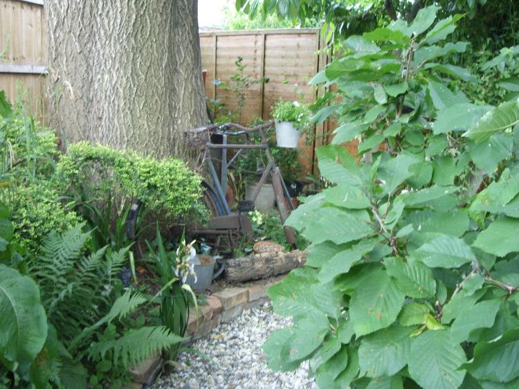 Ash tree & bicycle.jpg