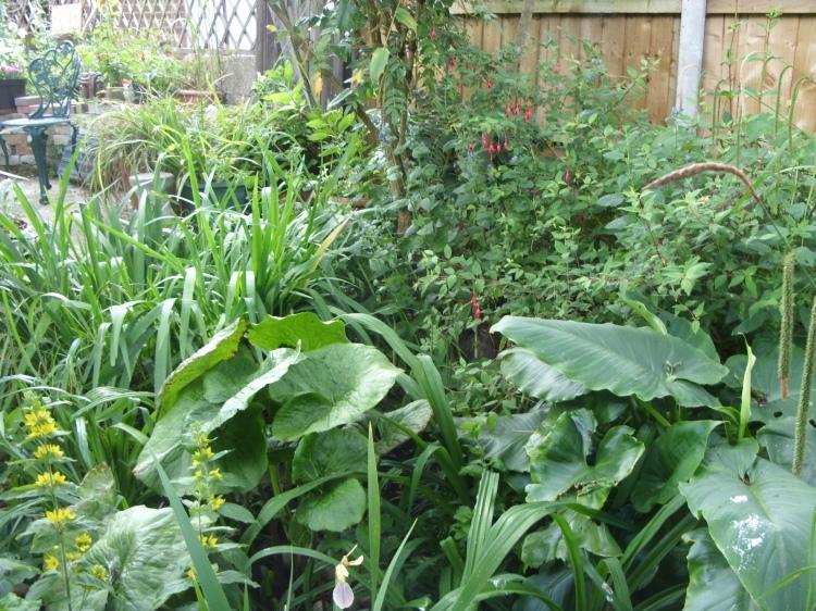 open garden pic 17 15 jun 15.jpg